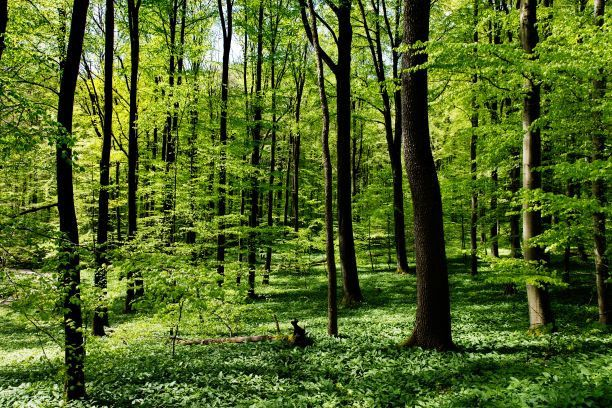 Der Nationalpark Hainich zählt zu den größten zusammenhängenden Laubwaldgebieten Mitteleuropas.