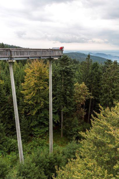 Der Waldwipfelweg bietet spektakuläre Aussichten.