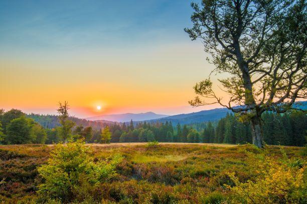Besucher des Nationalparks Bayerischer Wald erleben Natur pur.