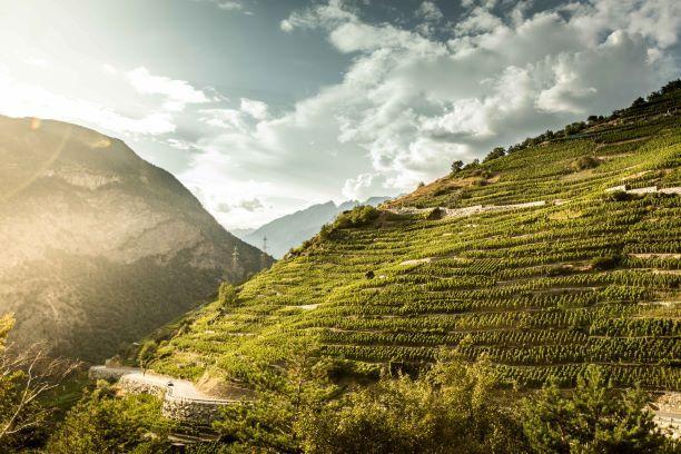Das Wallis ist ein Weinland und in Visperterminen feiert der Rebbau Rekorde. Denn hier liegen auf einer Höhe von 1100 Metern über Meer die höchsten Weinberge Europas.