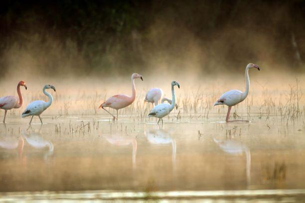 Im münsterländischen Zwillbrock ist die nördlichste Flamingo-Brutkolonie Europas beheimatet.