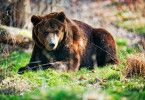 Die Bären führen im Bärenpark Worbis ein artgerechtes Leben.