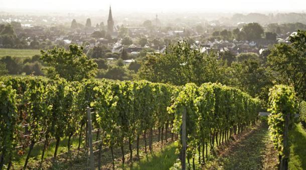 """Blick von der Weinlage """"Paradiesgarten"""" auf Deidesheim in der Pfalz: Dort lud Altkanzler Helmut Kohl seinerzeit mehrere Staatsgäste zum """"Saumagen"""" ein."""