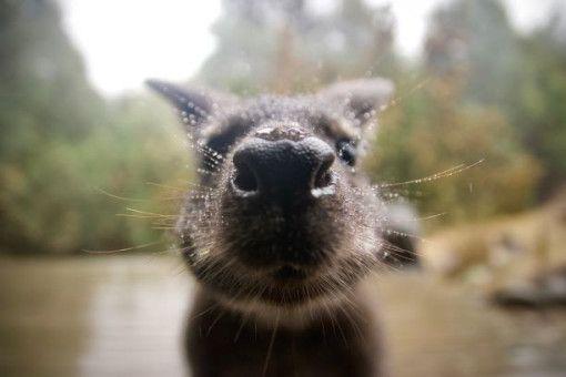 Ganz schön neugierig sind die Tiere.