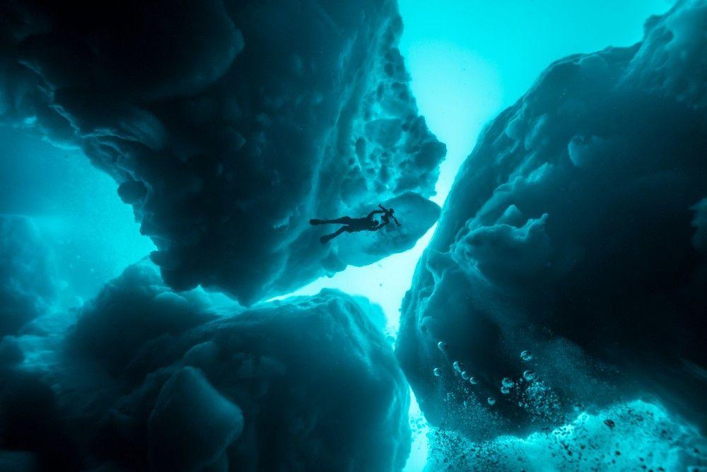 Hier sieht man sie umgeben von Eis im Nordmeer.