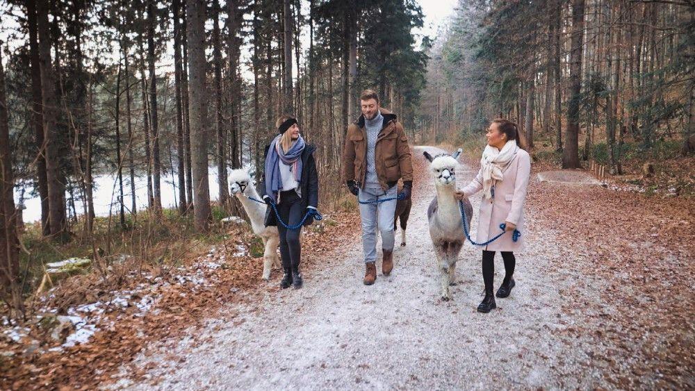 Niko, Stephie und Karina bei einem Spaziergang mit Alpakas. Was Stephie noch nicht weiß: Eines der Tiere wird sie voll vors Knie treten. Wie gemein!