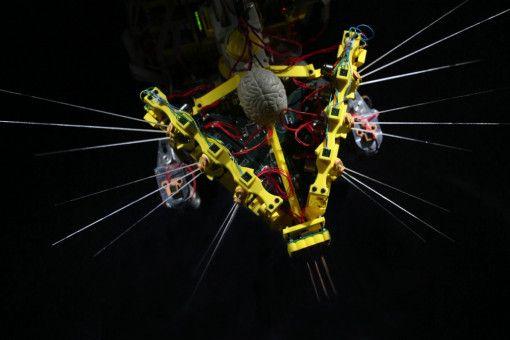 Die Idee, einen Roboter zu konzipieren, der sich dank seiner Schnurrhaare im Dunkeln oder in rauchgefüllten Räumen bewegen kann, beschäftigt die Roboteringenieure sehr.