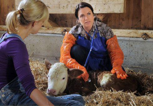 Manchmal muss die Landärztin Johanna (Christine Neubauer, rechts) auch als Tierärztin einspringen, wie hier auf dem Hof von Verena (Judith Richter).