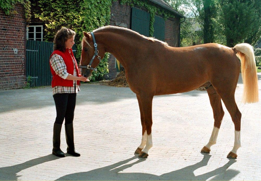 Die 15-jährige Alina (Marett Katalin Klahn) hat ein sicheres Gespür für Pferde. Auch Silverado frisst ihr aus der Hand - vor seinem traumatischen Erlebnis.