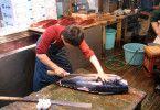 Der frische Fang wird portioniert und später zu Sushi verarbeitet ...