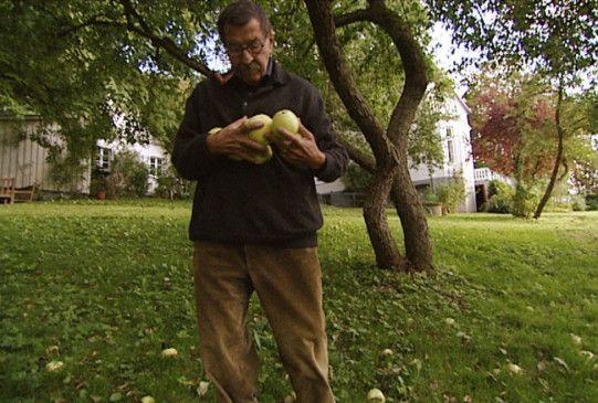 Seltene private Aufnahme: Grass beim Äpfel sammeln im Garten seines Hauses