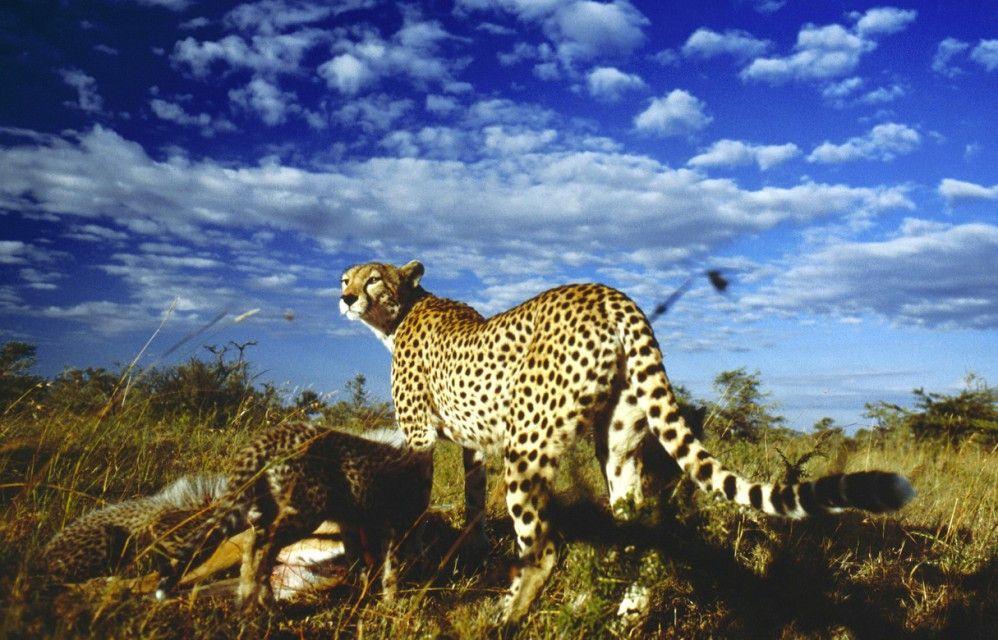 Atemberaubend: Tierwelt Serengeti