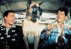 Ich wollte Anita und nicht den Köter! Jerry Lewis  (l.) und Dean Martin unterwegs