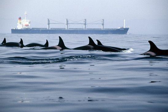 Wale vor Gibraltar