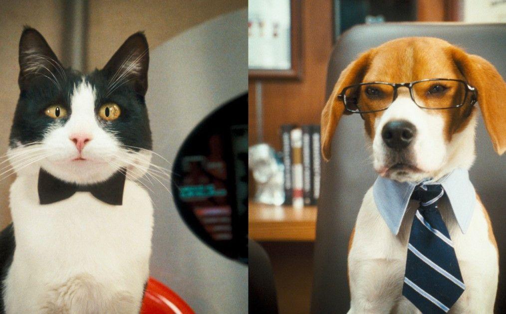 Machen dieses Mal gemeinsame Sache: Katze und Hund