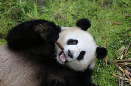 Panda Gorilla Und Co Mediathek