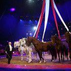 Alexis Gruss präsentiert ein Pferdekarussell.