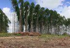 Kahlschlag bedroht den Bestand der Wälder.