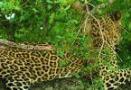 Sambia - Königreich der Leopardin