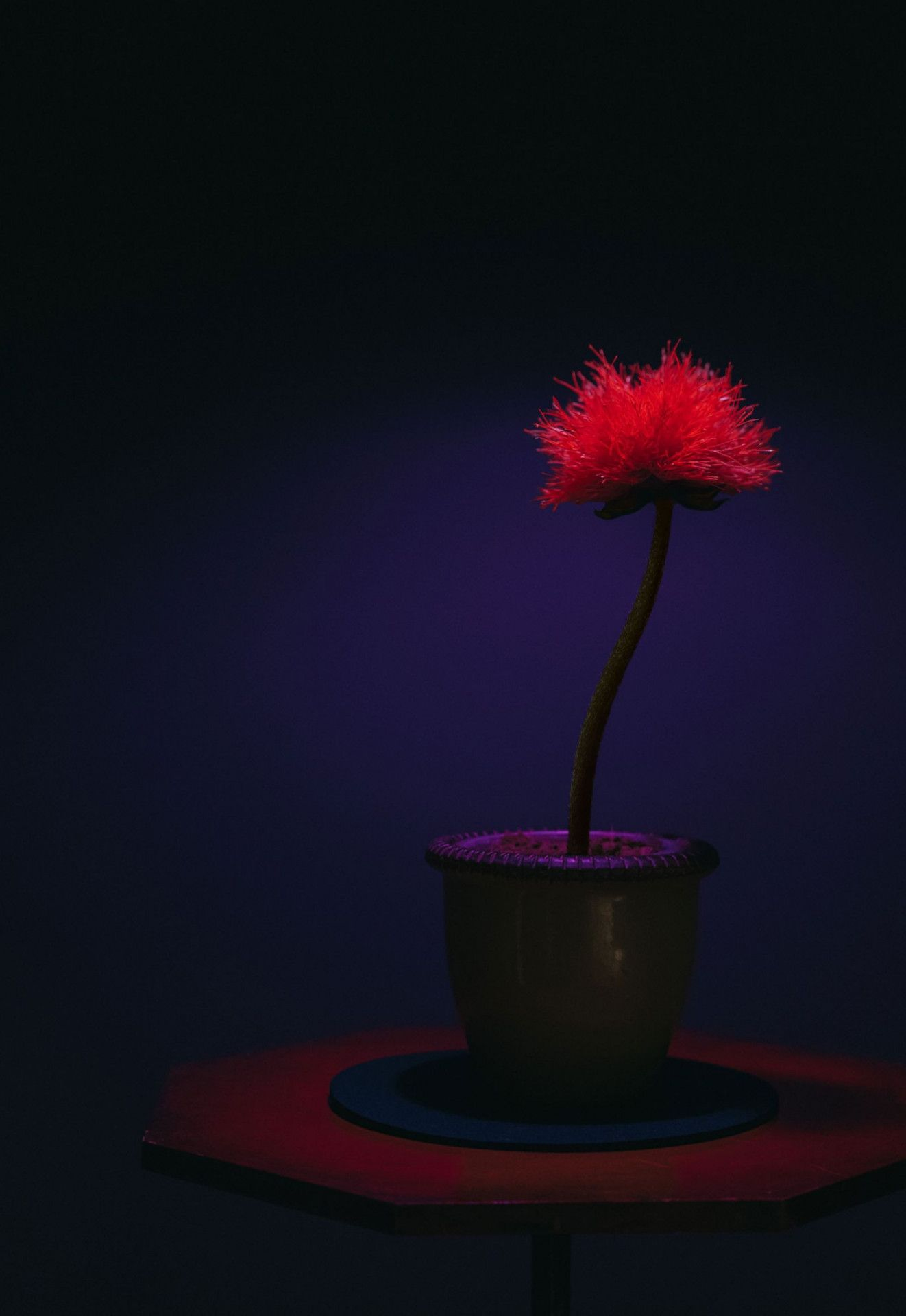 Little Joe heißt die Pflanze, die Menschen glücklich macht - ob sie es wollen oder nicht.