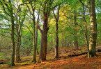 Peter Wohlleben bezeichnet den Wald gerne als sozialen Verbund. Zwischen den Bäumen bestehen lange Wurzelverwachsungen, über die sie sich gegenseitig versorgen können.
