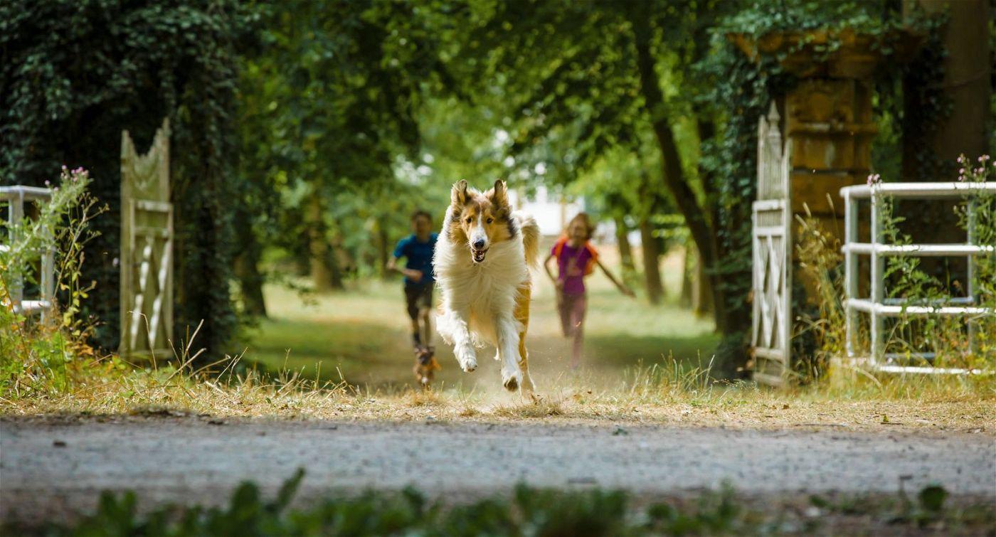 Lassie hat nur ein Ziel: zurück nach Hause!